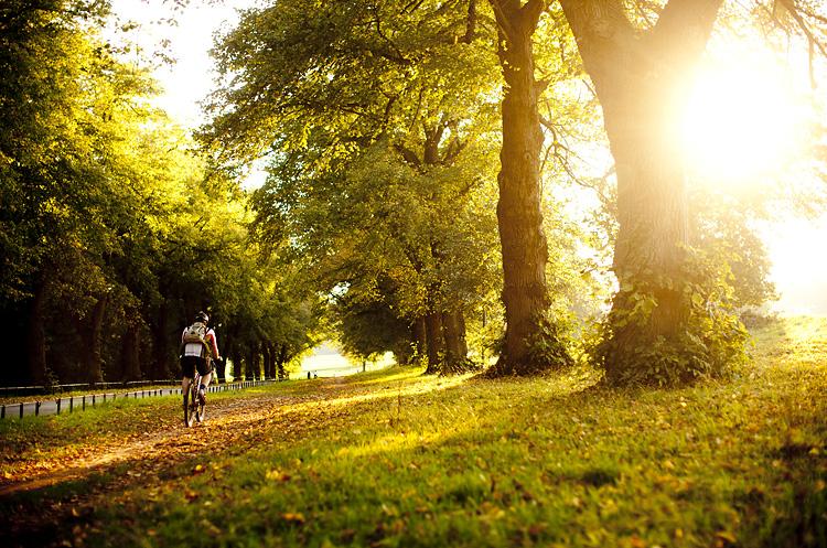 Ashton Court bike trails in Bristol by Adam Gasson / adamgasson.com
