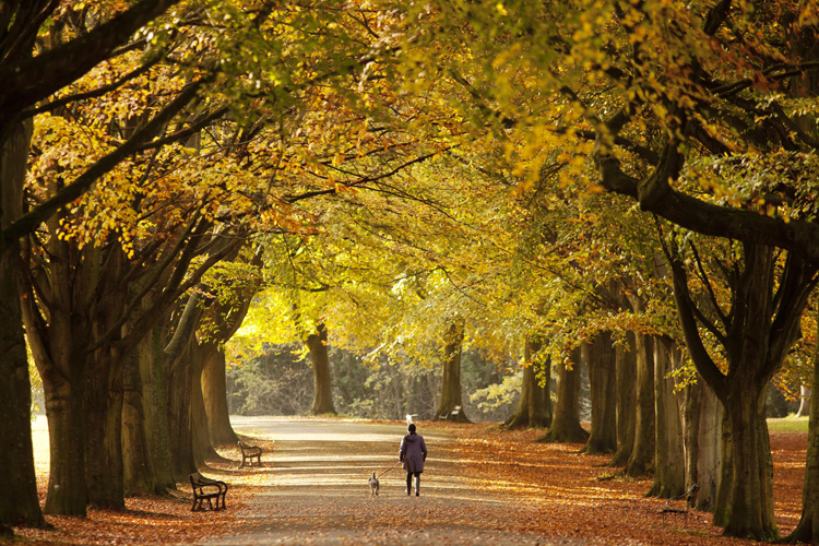 Late autumn colours in Clifton, Bristol by Adam Gasson