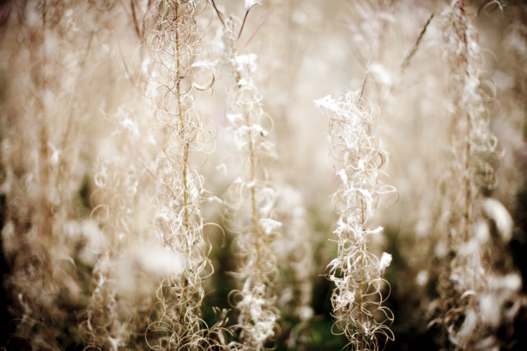 Grasses on a trackside in Wales by Adam Gasson.