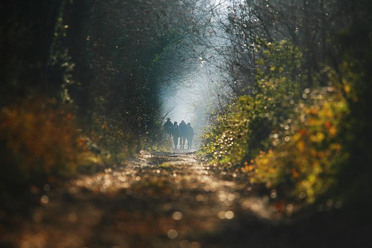 Wiltshire morning walk by Adam Gasson