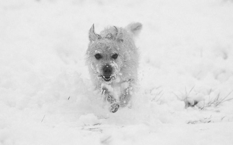 Snowfall across Bristol by Adam Gasson / adamgasson.com