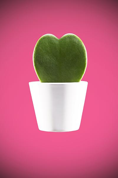 Heart shaped plant by Adam Gasson / adamgasson.com